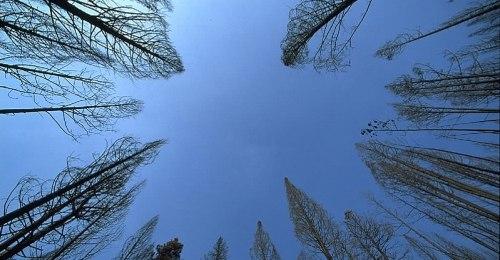 https://www.literaturportal-bayern.de/images/lpbblogs/autorblog/2018/klein/Trees-sky_500.jpg