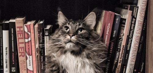 https://www.literaturportal-bayern.de/images/lpbblogs/instblog/2017/klein/verlag_500.jpg