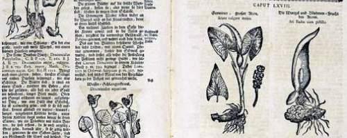 https://www.literaturportal-bayern.de/images/lpbblogs/loge49_kraeuterbuch_200.jpg