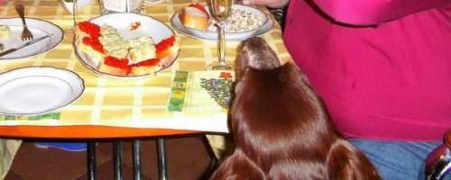 https://www.literaturportal-bayern.de/images/lpbblogs/loge85_silvesterhund_200.jpg